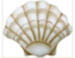 Sea Shells Bar & Restaurant